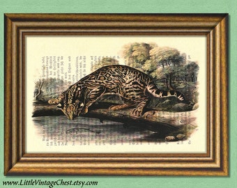 MY BENGAL CAT - Dictionary art print -Wall art - book page print recycled - Art Print Dictionary