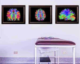 neuroscience, brain art, anatomy art decor, brain, college student gift, human anatomy, Doctor Print, medical decor,  Medical Poster