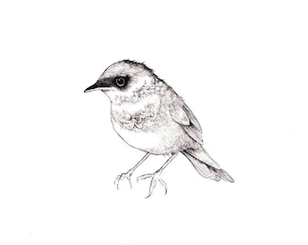 """Songbird Print: Digital print of an original drawing available 5x7"""" or 8x10"""""""