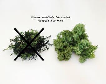 Stabilized, moss green moss, MOSS terrarium Moss dried reindeer Moss