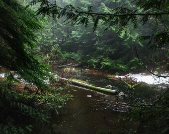 Creek in Foggy Forest in Eastern Washington, Pine Forest in Winter, Forest Art Print, Rocky Mountain Photography, Wilderness Mountain Stream
