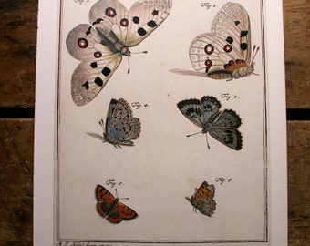 Vintage Botanical Print - White, Blue and Orange Butterflies