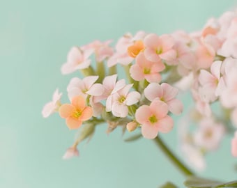 Coral Flower Print, Still Life Photography, Floral Art Print,  Shabby Chic Wall Decor, Bedroom Decor