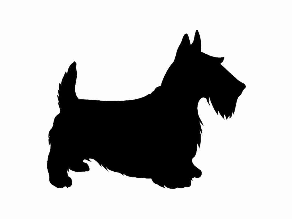 Toto Popular Name For Dogs
