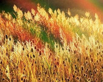 Fall Foliage, Fall Print, Autumn Print, Flower Print, Dreamy Print, Rainbow Print, Rainbow Photo, Country Print
