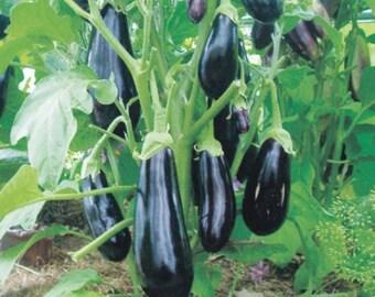Eggplant seeds Diamond Heirloom Vegetable Seed from Ukraine#619