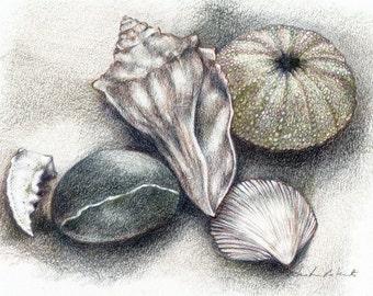 Muschel Kunstdruck, Zeichnung, Muschel Strand Muscheln Buntstift Zeichnung, Muscheln Urchin Strand Stein, Strand Thema Kunst, Strand Dinge Fine-Art Print