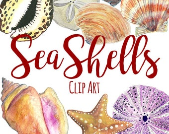 Handpainted Watercolor Seashell Clip Art, Starfish Clip Art, Watercolor Clip Art, INSTANT DOWNLOAD, Sand Dollar ClipArt, Nature Clip Art