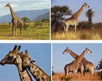Lot Of 12 Giraffes Fabric Panel Quilt Squares