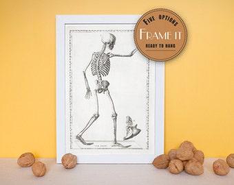 "Vintage anatomical illustration of human skeleton figure - framed fine art print, art of anatomy, 8""x10"" ; 11""x14"", FREE SHIPPING 155"