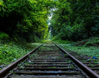 Railroad Tracks Green Nature Serene Photograph Print