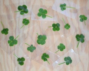 Real 4 four leaf clover lucky charm, Nature lover gift, Good luck charm, Shamrock, Pressed and Preserved, Grown wild in Ontario Canada
