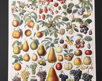 Board naturalist, history & natural sciences - fruit - Larousse