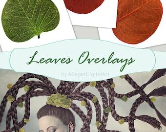 fall leaf overlays, digital overlay, Photoshop overlays, Fall Autumn Falling Leaves, leaf photography, photography overlays, photo overlay