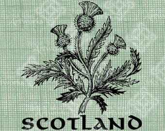 Digital Download Scottish Thistle, digi stamp, digis, digital stamp, Antique Illustration, Icon of Scotland
