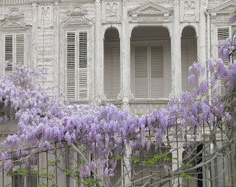 Purple Wisteria Mansion photography Istanbul photos blue Wall decor