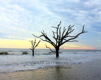 Botany Bay Sunset - Edisto Beach South Carolina Photography SC Charleston Drift Wood Tree Shore Ocean Nautical Art Hanging - 8x10 Photograph