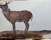 Whitetail deer on wood oil painting. Cheryl Korb