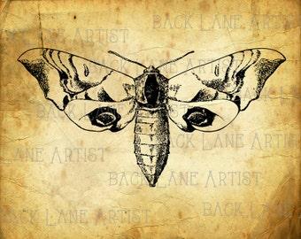 Vintage Moth Clipart Lineart Illustration Instant Download PNG JPG Digi Line Art Image Drawing La54