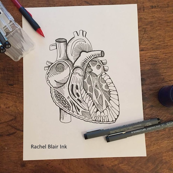 Adult Coloring Page Heart Anatomy