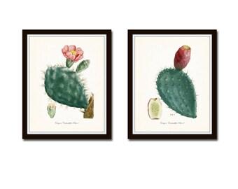 French Cactus Botanical Print Set No. 2, Giclee, Art Prints, Antique Botanical Prints, Wall Art, Prints, Cactus Prints, Desert Art, Flowers