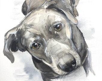 Custom pet portrait, dog, dog portrait, pet portrait, custom pet painting, animal painting, dog watercolor, watercolour dog portrait