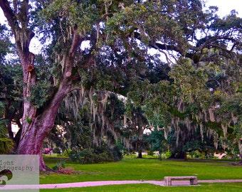8x10 the Graceful Oaks- City Park Oak Trees 8