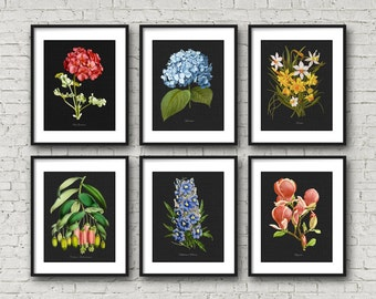 Botanical Print Set, Magnolia Botanical, Hydrangea Narcissus, Flower Botanical Print, Home Decor, Vintage Botanical Print Reproduction GR007