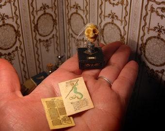 Siren Mermaid Skull . dollhouse oddities  2 Scientific illustrations . speciments box, curiosity cabinet, Fake Taxidermy  1/12 th