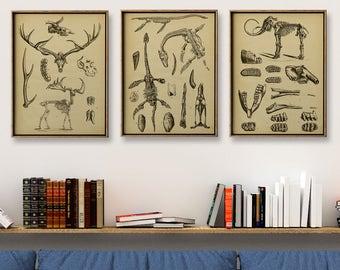 DINOSAUR SKELETONS print SET of 3 Art Prints, Instant Collection Paleontology Wall Decor, Science Poster, Animal Fossils Chart, Skeleton
