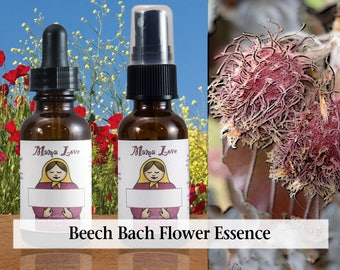 Beech Bach Flower Essence, Dropper or Spray for Releasing Intolerance and Criticisms, Learning Acceptance and Finding the Good