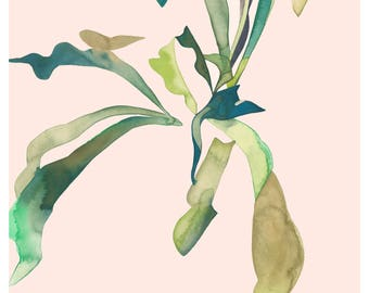 STAGHORN 1 12x16 (Giclée Print of Original Watercolor Painting Illustration Wall Art Home Decor Gift Staghorn Fern Houseplant)