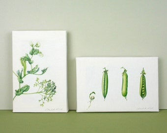 Kitchen Art-pea canvas-vegetable illustrations-gift for chef-gift for foodie-food art-print for dining room-plant box canvases-pea plant art