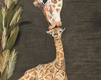 Giraffe -  Mothers First Kiss