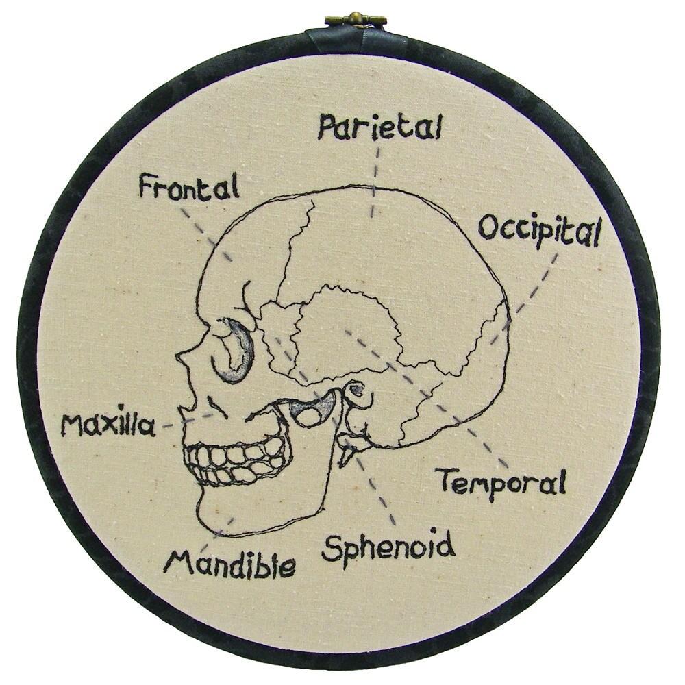 Único Diagrama Del Cráneo Humano Colección - Imágenes de Anatomía ...