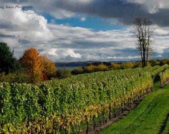 Vineyard Photograph, Winery Photo, Old Mission Peninsula, Traverse City, Michigan, Wine Photography, Vineyard Rows