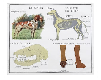 Vintage Authentic French Educational Double-Sided School Poster Chart - Le Chien / Dog / Les Insectivores