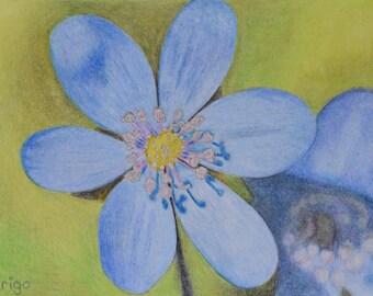 Liver Floret, flower, flower, small painting, crayon, 13 x 18 cm, original painting, handmade, blue, green