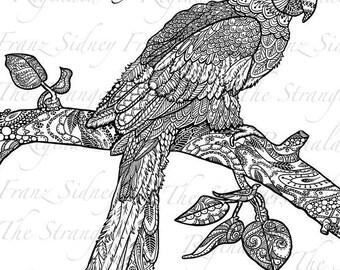 Reginald the parrot