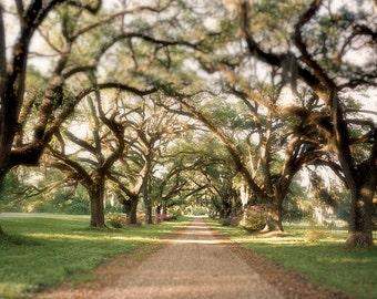 Photography, Landscape , Tree Photography, Southern Trees, Americana Classic Art, Fine Art Photography, Large Wall Art