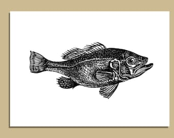 SALE - Set of 10 Fish Notecards With Envelopes - 5 x 7 inches -  Greeting Cards