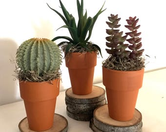 Small terra-cotta pots with faux succulents/cactus