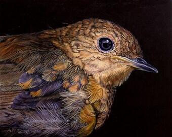 Original Oil painting, Baby Robin, Beautifully painted, Beautifully framed  gifts for him, gifts for her, birdwatcher, wildlife painting.