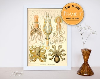 """Vintage illustration of squid from Ernst Haeckel  - fine art print, sea creatures,sea life, home decor 8""""x10"""" ; 11""""x14"""", FREE SHIPPING - 284"""
