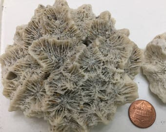 709 Trio of small med large corals terraiums salt water aquariums collage sculpture