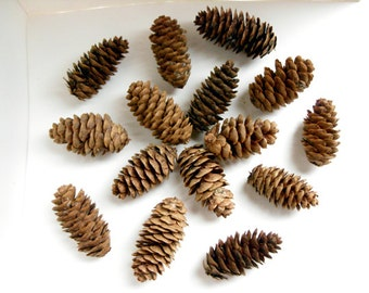 Spruce cones - Natural, eco-friendly, autumn decor, rustic wedding decor, Christmas wreath making, winter wedding, autumn wedding, set of 20