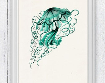 Jelly fish Discomedusa - sea life print- Marine  sea life illustration A4 print SAS104