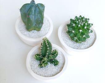 SURPRISE! Mini Cactus and Mini Handmade Ceramic Planter // Mini Planter // Cactus Plant // Handmade Planter // Cactus Planter // Mini