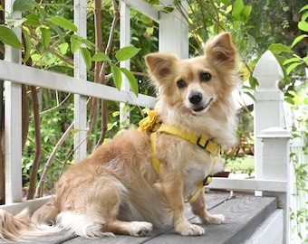 Custom, Step In Dog Harness, Frayed Linen in Meadowlark Yellow
