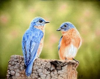 Original pastel drawing Eastern Bluebirds